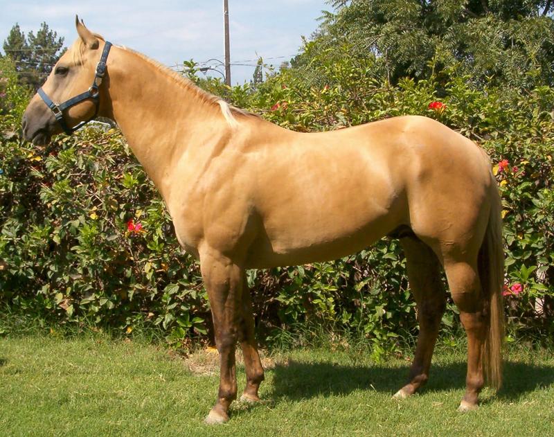 horse ranger