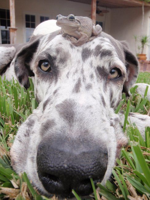 12 Reasons Great Danes Are The Worst Breed Ever