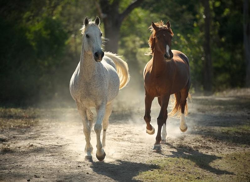 running horses pics