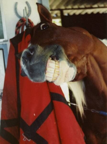 teeth horse photo
