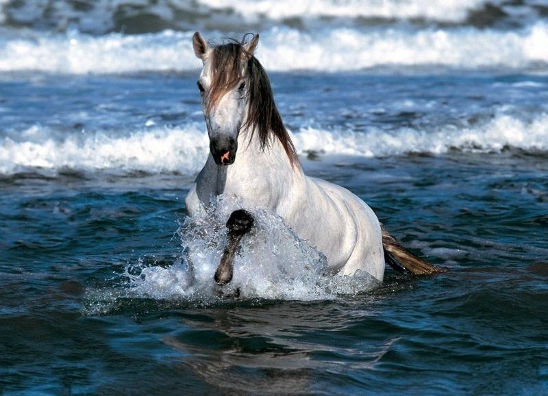 white_horse_running water