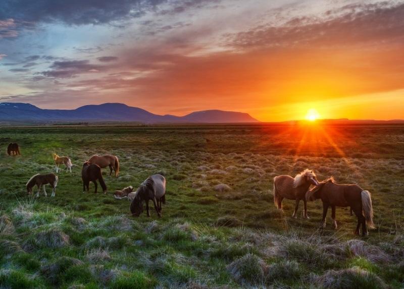 wild_horses_at_sunset pics
