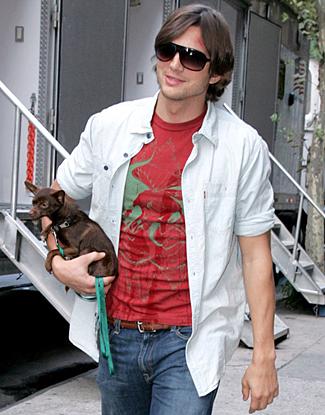 Ashton Kutcher chihuahua