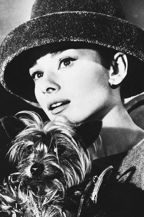 Audrey Hepburn and yorkie dog