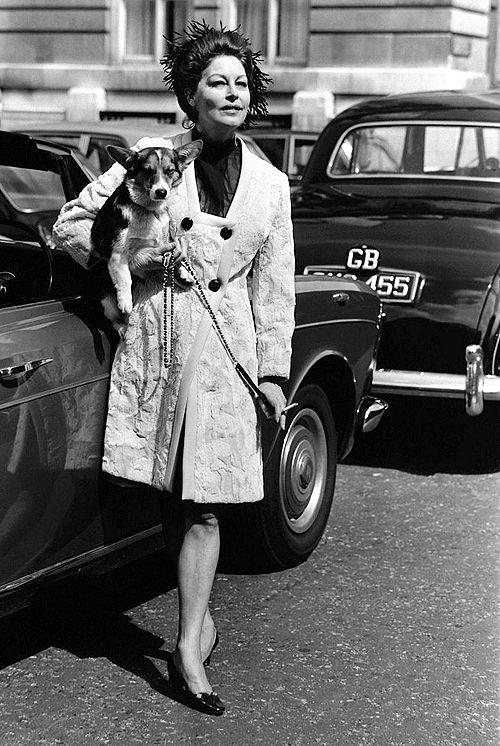 Ava Gardner corgi