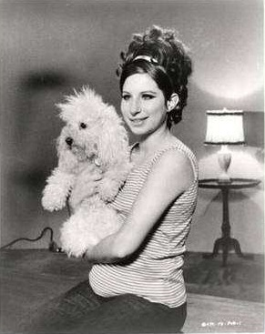 Barbara Streisand poodle