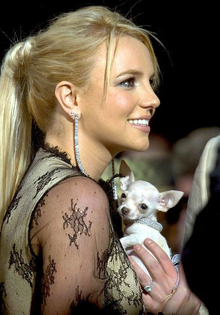 Britney Spears chihuahua pet