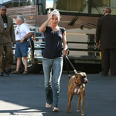 Cameron Diaz boxer dog