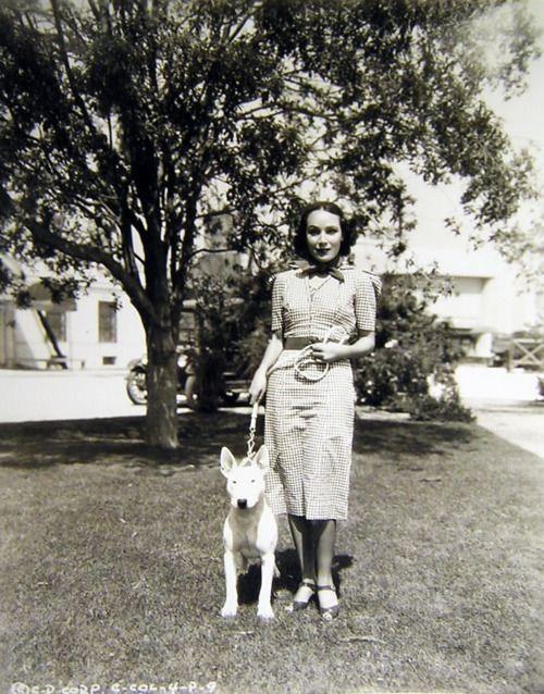 Dolores del Rio bull terrier