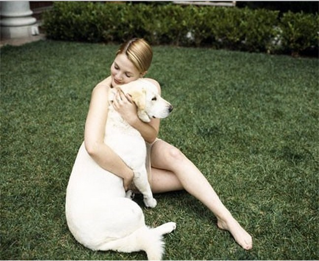 Drew Barrymore labrador