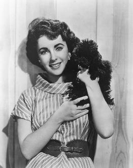 Elizabeth Taylor poodle