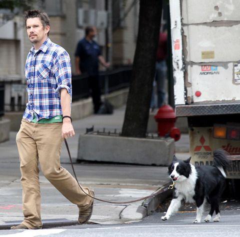 Ethan Hawke dog