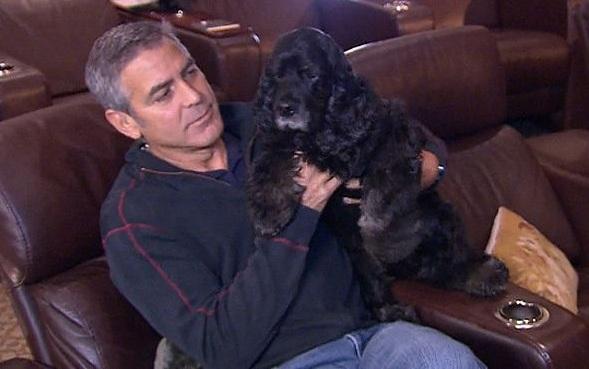 George Clooney cocker spaniel