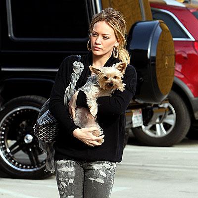 Hilary Duff yorkie