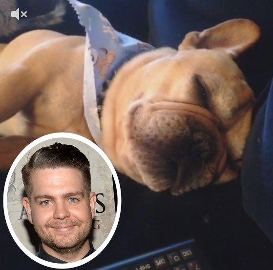 Jack Osbourne dog