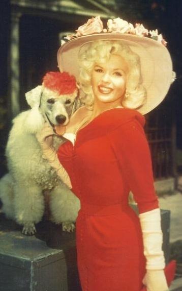 Jayne Mansfield poodle