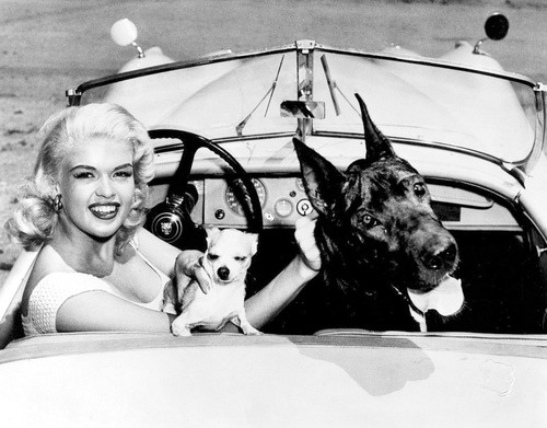 Jayne Mansfield with dogs