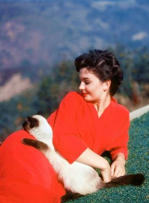 Jean Simmons cat