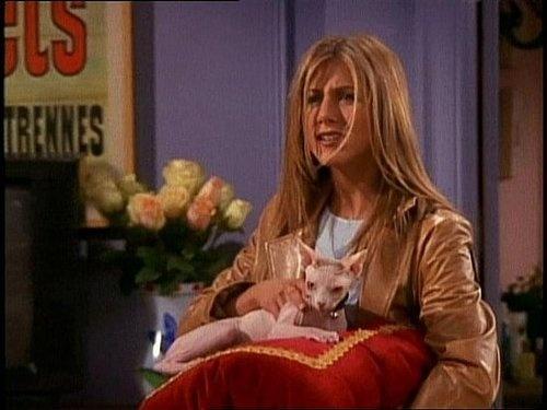 Jennifer Aniston with sphynx cat