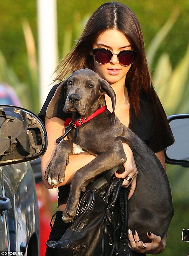 Kendall Jenner with great dane puppy