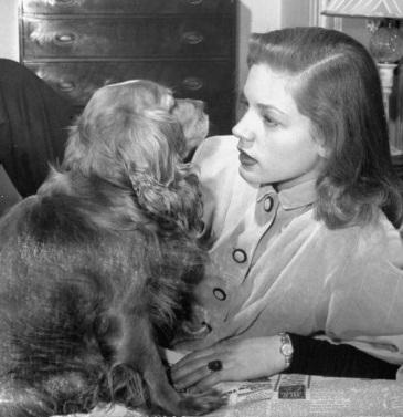 Lauren Bacall spaniel
