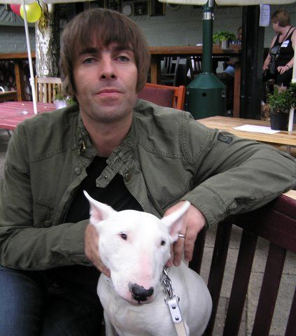 Liam Gallagher bull terrier