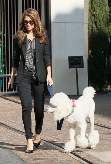 Maria Menounos poodle