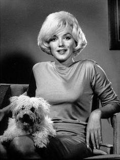 Marilyn Monroe poodle