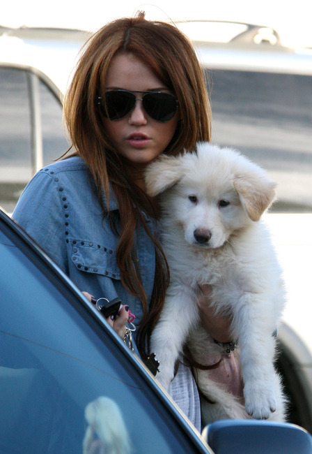 Miley Cyrus white german shepherd dog