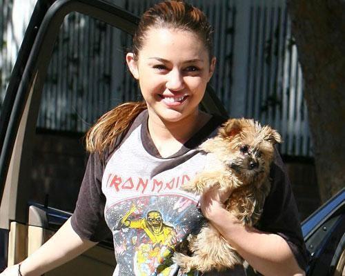 Miley Cyrus yorkie