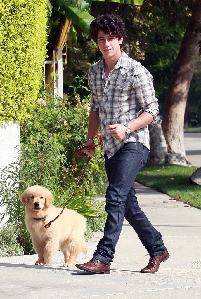 Nick Jonas golden retriever