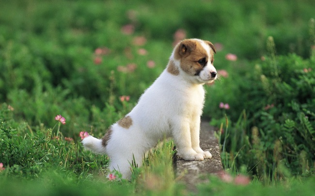 65 most popular pomeranian dog names pomeranian dog puppy thecheapjerseys Image collections