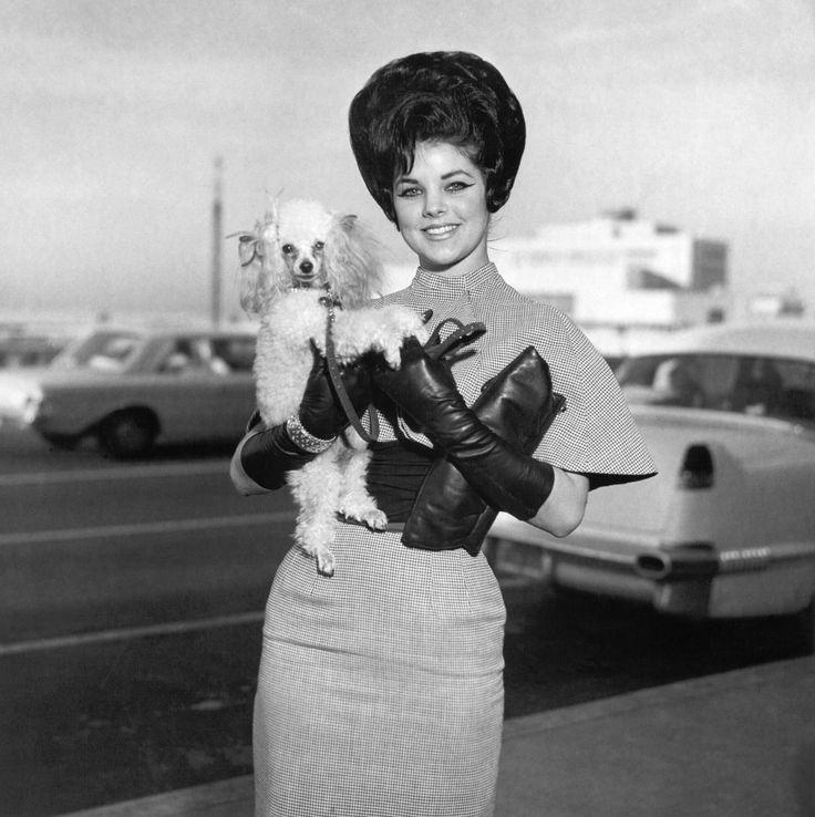Priscilla Presley poodle