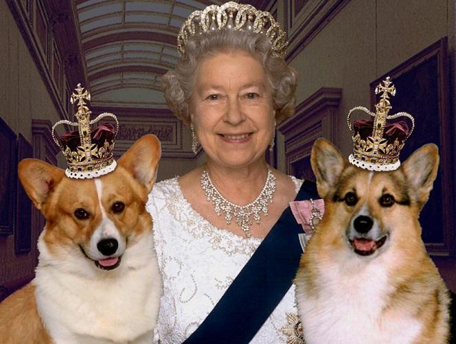 Queen Elizabeth corgis