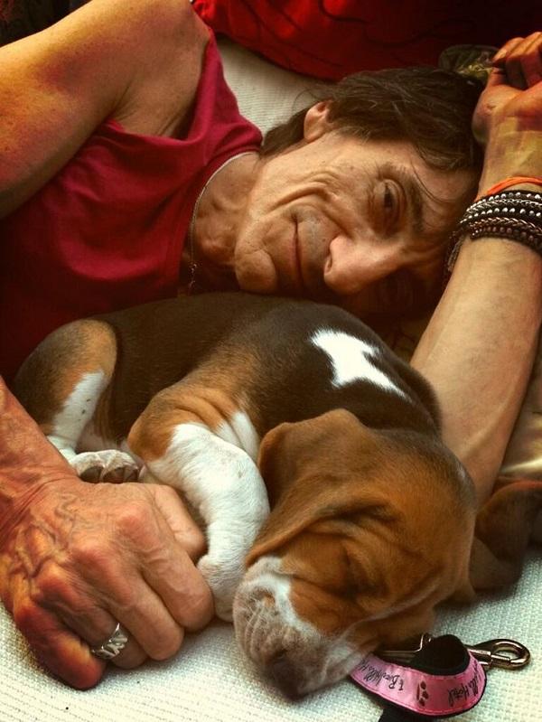 Ronnie Wood basset hound