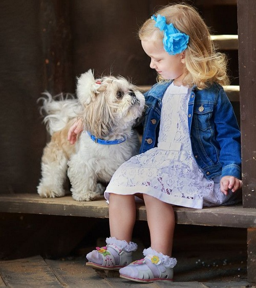 Shih Tzu and girl