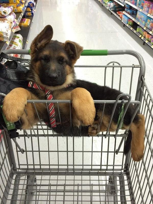 Walmart funny puppy pics