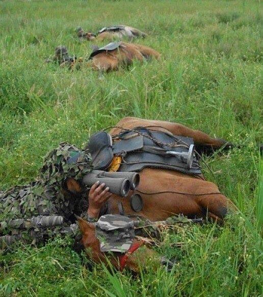 War Horses photo