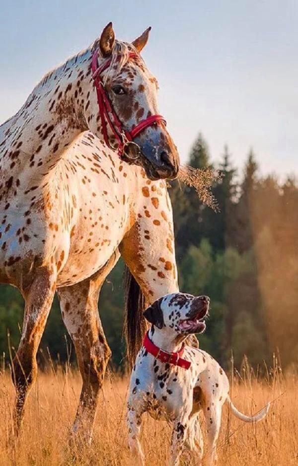 beautiful horse and dog friends