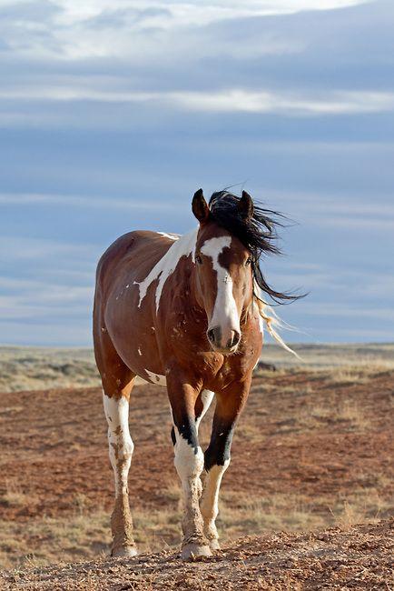 cool stallion photo