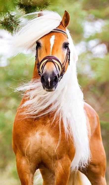 cute pics horse photo
