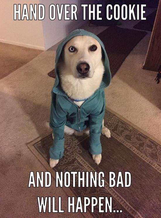 funny husky meme