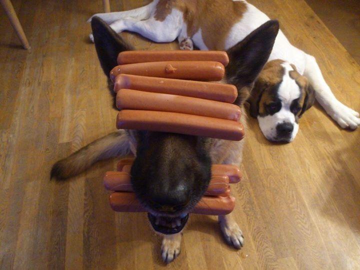 german shepherd food dog