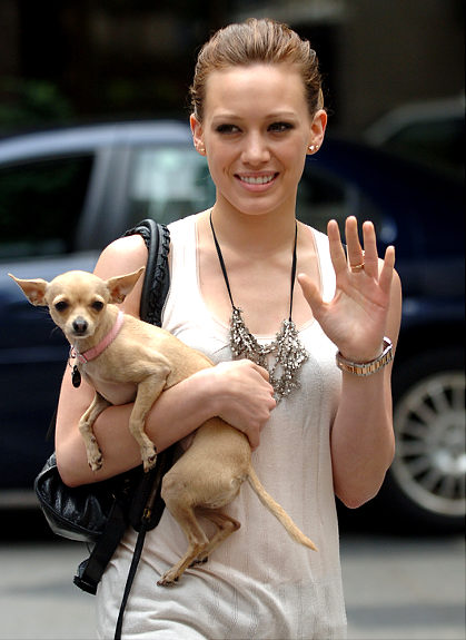18 Celebrities With Chihuahuas 1