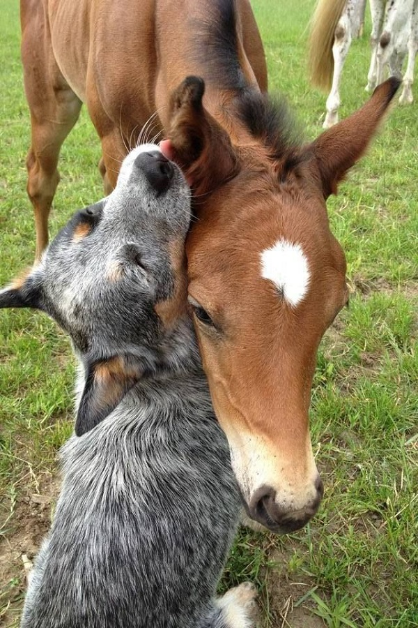 horse and dog friendship
