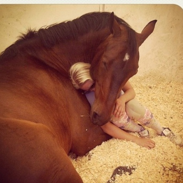 horse love photo pics