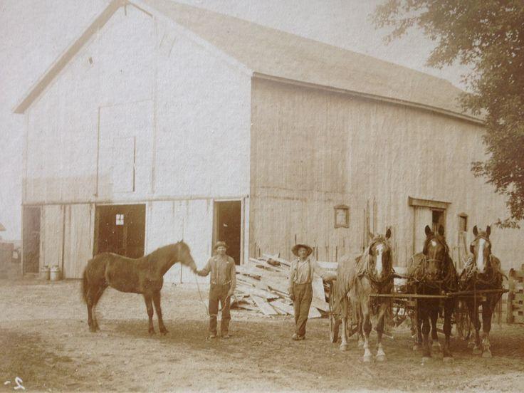horses old photo men