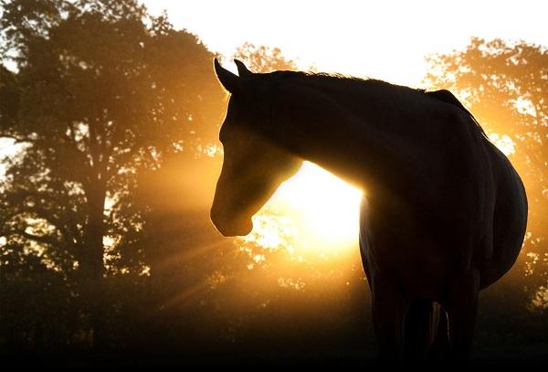 morning horse sunrise