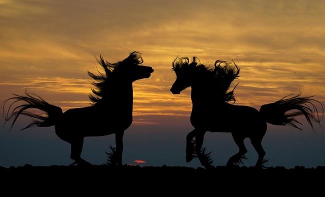 night horses 2