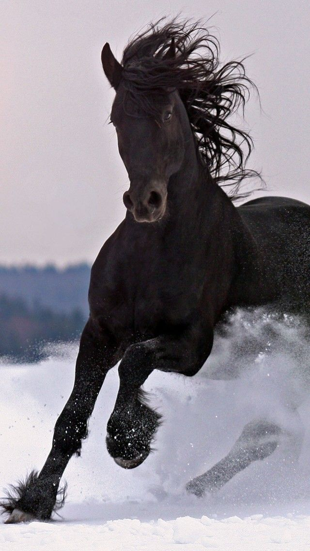 running horse winter snow